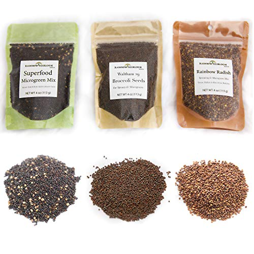 Rainbow Heirloom Seed Co.  1 Heirloom Sprouting & Microgreen Seed Variety Pack   Contains Waltham 29 Broccoli Sprouts Seeds