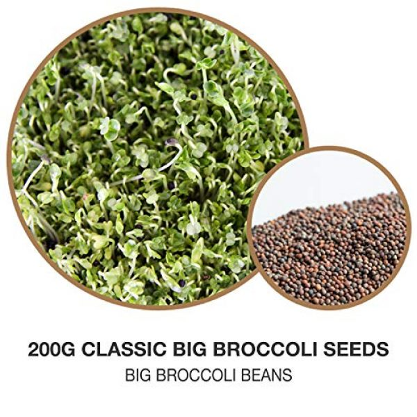Masontops Organic Seed 2 Mumm's Sprouting Seeds - Classic Big Broccoli Sprouts - 200 GR - Sprout Your Own Organic Microgreens - Easy Sprouter Kit