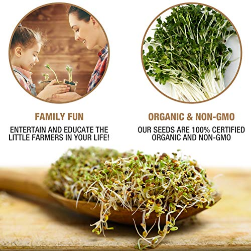 Masontops  4 Mumm's Sprouting Seeds - Classic Big Broccoli Sprouts - 200 GR - Sprout Your Own Organic Microgreens - Easy Sprouter Kit