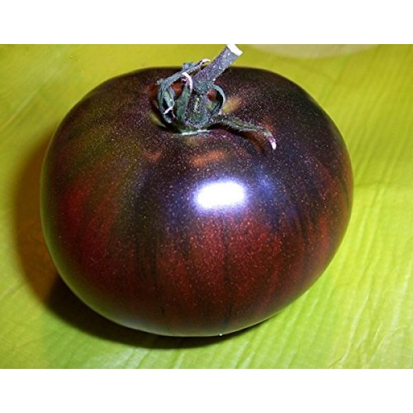 Harley Seeds Heirloom Seed 3 30+ Black from Tula Beefsteak Tomato Seeds, Heirloom Non-GMO, Indeterminate, Open-Pollinated, Productive, Meaty and Sweet, Slicer, Early, Purple-Black, Super Delicious! from USA