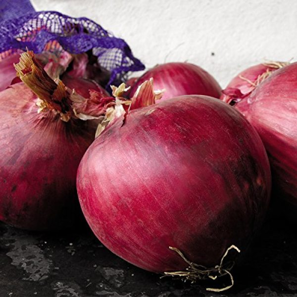 SEEDS OF CHANGE Organic Seed 4 Seeds of Change 05790 Certified Organic Seed, Redwing F1 Onion