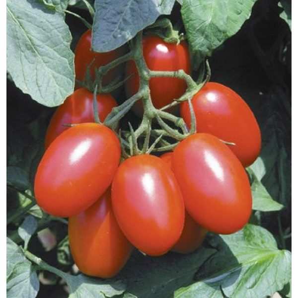 DH Seeds Organic Seed 1 150+ Organic Juliet Tomato Seeds - DH Seeds - Free Seeds Included