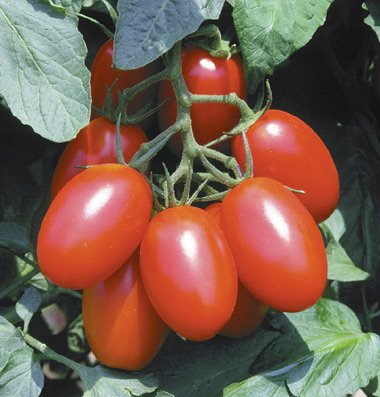 DH Seeds  1 150+ Organic Juliet Tomato Seeds - DH Seeds - Free Seeds Included