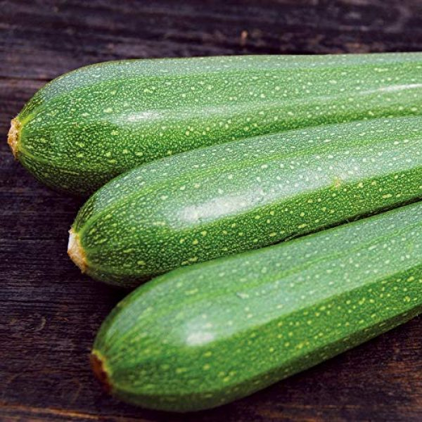 Seedz Organic Seed 2 Organic Zucchini Seeds, APPR. 60, Dark Green Zucchini Squash, Heirloom Vegetable Seeds, Certified Organic, Non GMO, Non Hybrid, USA