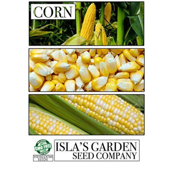 """Isla's Garden Seeds Heirloom Seed 3 """"Nirvana Supersweet"""" Hybrid Corn Seeds, 25+ Premium Heirloom Seeds, So Delicious!,(Isla's Garden Seeds), Non GMO Seeds, 85% Germination, Highest Quality Seeds, 100% Pure"""