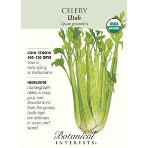 Hirts: Seed; Vegetable Organic Seed 1 Organic Utah Celery Seeds - 350 mg - Botanical Interests
