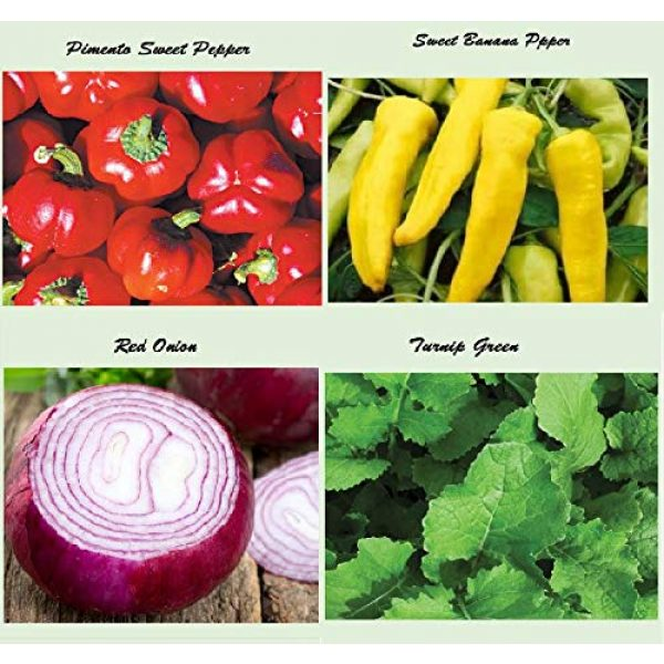 Apexmode Organic Seed 3 Set of 16 Assorted Organic Vegetable & Herb Seeds 16 Varieties Create a Deluxe Garden All Seeds are Heirloom, 100% Non-GMO Sweet Pepper Seeds, Hot Pepper Seeds-Red Onion Seeds- Green Onion Seeds