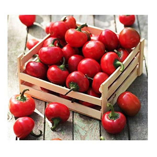 Marde Ross & Company Heirloom Seed 1 Red Cherry Hot Pepper Seeds - Heirloom and Open Pollinated