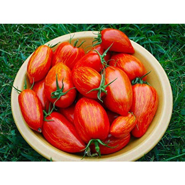 Isla's Garden Seeds Heirloom Seed 4 Speckled Roman Tomato Seeds, 100+ Premium Heirloom Seeds!, Delicious Hybrid! (Isla's Garden Seeds), Solanum lycopersicum, Non GMO, 85% Germination, Open Pollinated, Highest Quality.
