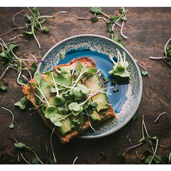 Rainbow Heirloom Seed Co. Heirloom Seed 3 Superfood Microgreen Seeds Mix | for Microgreens Growing Trays | 1 LB | Heirloom Non GMO Purple Kohlrabi, Collard, Radish, Turnip & Broccoli Sprouts Seeds | Rainbow Heirloom Seed Co.