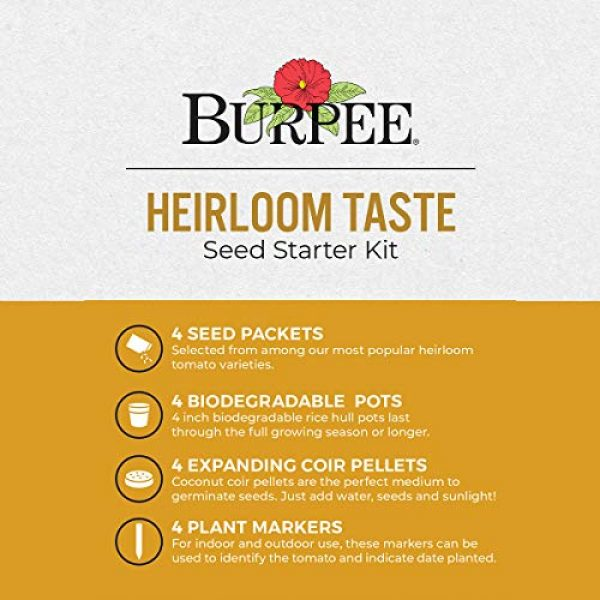 Burpee Heirloom Seed 2 Burpee Heirloom Taste Starting Kit Mortgage Lifter, Cherokee Purple, Big Rainbow & Brandywine Pink | 4 Beefsteak Tomato Seed Packets, 4 Pots, 4 Coir Pellets & 4 Plant Markers