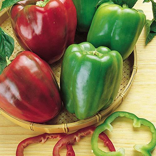 Burpee  1 Burpee California Wonder' Heirloom Sweet Red & Green Large Stuffing Bell Peppers