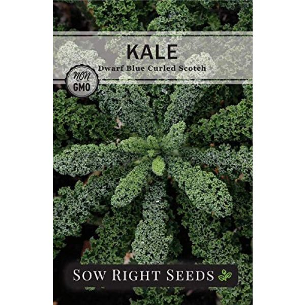 Sow Right Seeds Heirloom Seed 3 Sow Right Seeds - Kale Seed Collection for Planting - Non-GMO Heirloom Packet with Instructions to Plant and Grow a Home Vegetable Garden, Great Gardening Gift