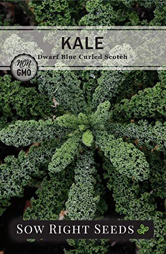 Sow Right Seeds  2 Sow Right Seeds - Kale Seed Collection for Planting - Non-GMO Heirloom Packet with Instructions to Plant and Grow a Home Vegetable Garden