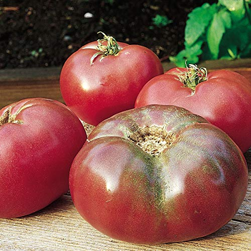 Burpee  1 Burpee 'Cherokee Purple' Heirloom   Large Purple Slicing Tomato   Rich Flavor   50 Seeds