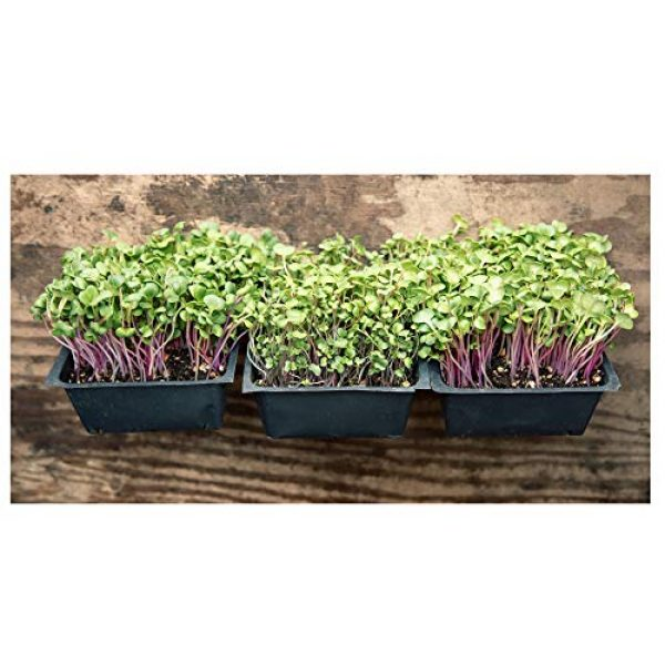 Rainbow Heirloom Seed Co. Heirloom Seed 6 Heirloom Sprouting & Microgreen Seed Variety Pack | Contains Waltham 29 Broccoli Sprouts Seeds, Rainbow Radish Sprouting Seeds Mix & Superfood Microgreen Mix | Non-GMO | Rainbow Heirloom Seed Co.