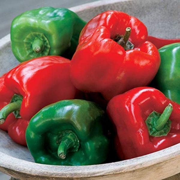 Burpee Heirloom Seed 6 Burpee California Wonder' Heirloom Sweet Red & Green Large Stuffing Bell Peppers, 300 Seeds