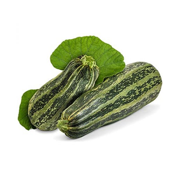 Isla's Garden Seeds Heirloom Seed 1 Cocozelle Zucchini Summer Squash Seeds, 30+ Premium Heirloom Seeds, Fantastic Addition to Your Home Garden! Delicious & Huge! (Isla's Garden Seeds),Non GMO, 90% Germination Rates, Highest Quality