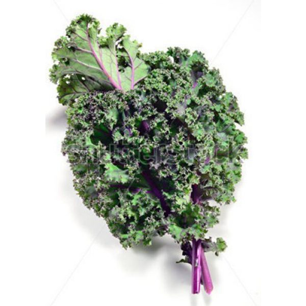 Marde Ross & Company Heirloom Seed 1 Red Russian Kale - 1000+ Heirloom Seeds, Non-GMO