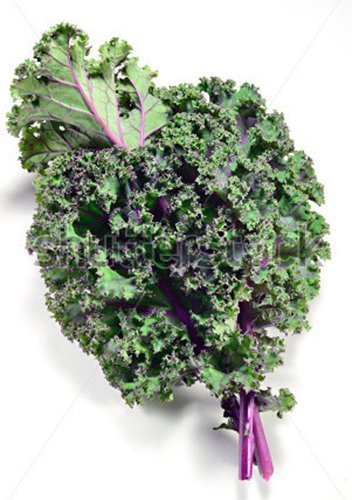 Marde Ross & Company  1 Red Russian Kale - 1000+ Heirloom Seeds