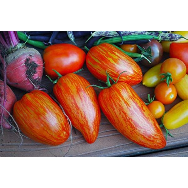 Isla's Garden Seeds Heirloom Seed 3 Speckled Roman Tomato Seeds, 100+ Premium Heirloom Seeds!, Delicious Hybrid! (Isla's Garden Seeds), Solanum lycopersicum, Non GMO, 85% Germination, Open Pollinated, Highest Quality.