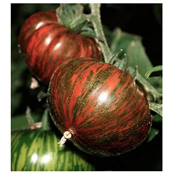 Marde Ross & Company Organic Seed 1 Organic Chocolate Stripes Heirloom Tomato Seeds - Large Tomato - One of The Most Delicious Tomatoes for Home Growing, Non GMO - Neonicotinoid-Free.