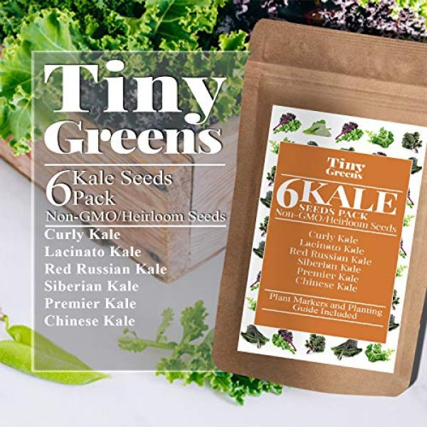 Tiny Greens Heirloom Seed 2 Grow Kale Seeds 6 Collection Pack for Planting(600 Seeds) Lacinato Kale Seeds, Curly Kale, Red Russian, Dwarf Siberian, Premier Kale, Chinese Kale | Heirloom Seeds Vegetables Non-GMO Vegetable Seeds