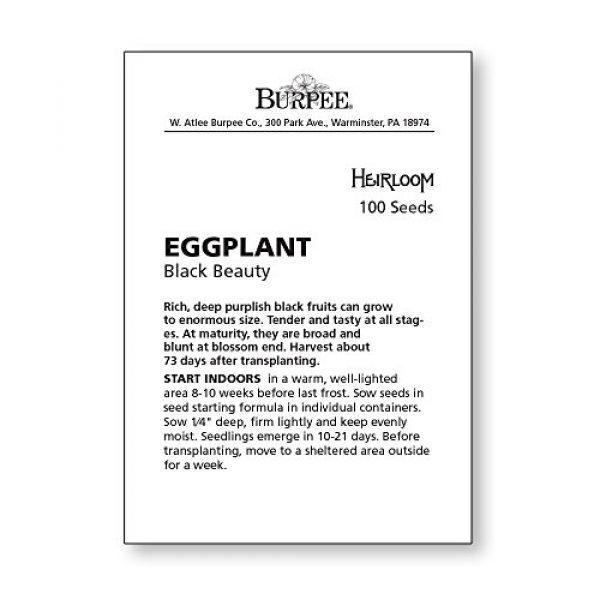 Burpee Heirloom Seed 4 Burpee Black Beauty Eggplant Seeds 100 seeds