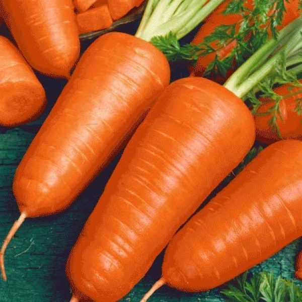 Isla's Garden Seeds Heirloom Seed 2 Red Cored Chantenay Carrot Seeds, 1000+ Premium Heirloom Seeds, Gardeners Choice!, (Isla's Garden Seeds), 85-90% Germination Rates, Non GMO, Highest Quality.