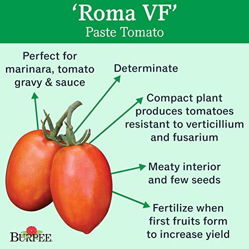 Burpee  2 Burpee 'Roma VF' Heirloom | Red Paste Tomato | 250 Seeds