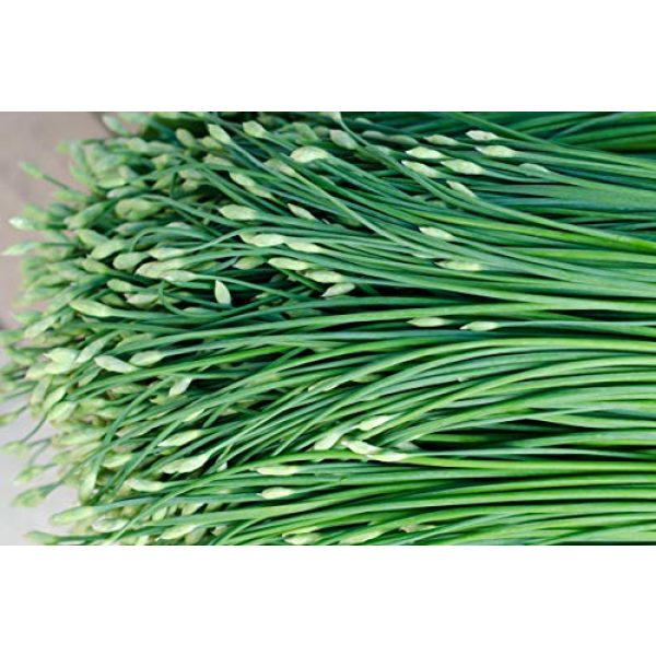 Sow Right Seeds Heirloom Seed 3 Sow Right Seeds - Garlic Chives Seeds for Planting - Non-GMO Heirloom Seeds; Instructions to Plant and Grow a Kitchen Herb Garden, Indoor or Outdoor; Great Gardening Gift (1)