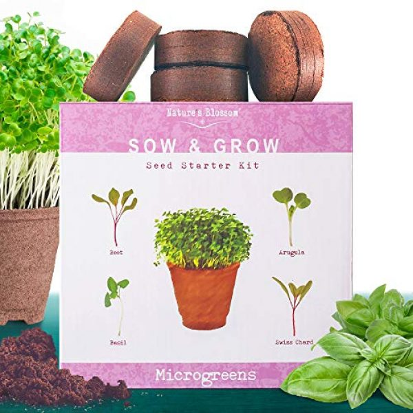 Nature's Blossom Organic Seed 1 Nature's Blossom Microgreen Vegetables Sprouting Kit - Beginner Gardeners Seed Starter Set to Grow Basil, beets, Chards and Arugula from Seeds. Grow from Seed to your Plate in 10 Days.