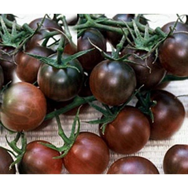 Fertile Ukraine Seeds Heirloom Seed 3 Seeds Cherry Tomato Black Early Vegetable Heirloom Ukraine