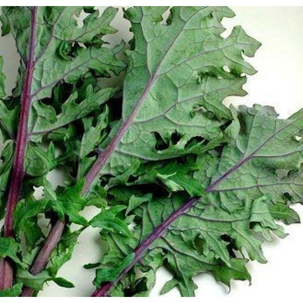 "Isla's Garden Seeds Organic Seed 6 ""Red Russian"" Kale Seeds, 750+ Premium Heirloom Seeds, ON SALE!, Top Selling Kale Seed, (Isla's Garden Seeds), Non Gmo Organic, 85% Germination Rates, Highest Quality Seeds, 100% Pure"