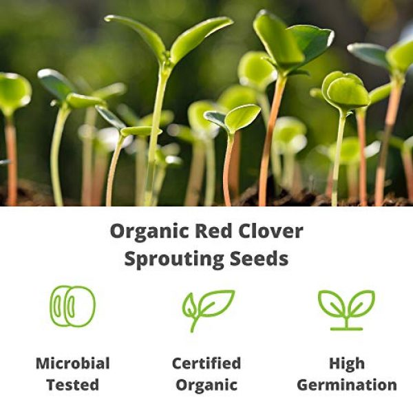 Handy Pantry Organic Seed 3 Organic Red Clover Sprouting Seeds by Handy Pantry Brand - 1 Lb Resealable Bag - Sprouts, Microgreens, Gardening, Food Storage, Hydroponics - Edible Seed
