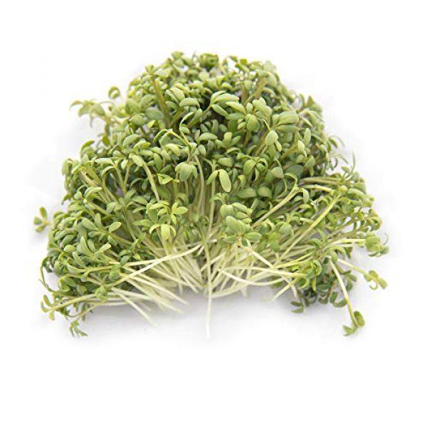 Rainbow Heirloom Seed Co. Heirloom Seed 2 Garden Cress Seeds for Microgreens & Planting Outdoors | 1 LB Bulk Lepidium sativum Seeds | Non GMO Heirloom Variety | Rainbow Heirloom Seed Co.