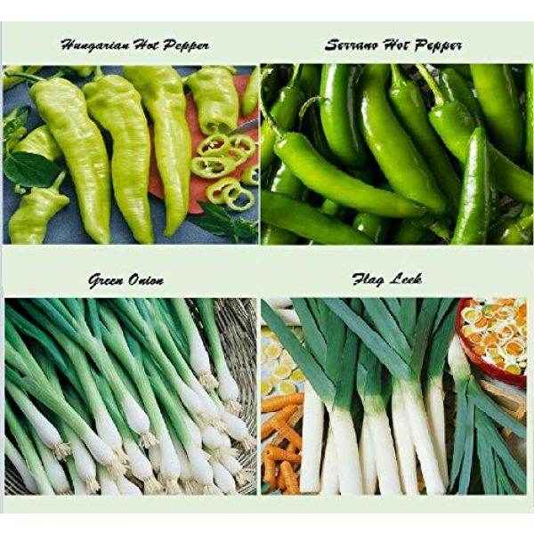 Apexmode Organic Seed 2 Set of 16 Assorted Organic Vegetable & Herb Seeds 16 Varieties Create a Deluxe Garden All Seeds are Heirloom, 100% Non-GMO Sweet Pepper Seeds, Hot Pepper Seeds-Red Onion Seeds- Green Onion Seeds