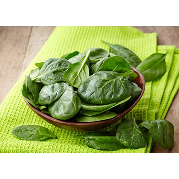 Heirloom Spinach Seeds Heirloom Seed 2 Heirloom Spinach Bloomsdale Seeds Non Hybrid No GMO, Grown in The USA. Heirloom Spincah Seeds 100 Plus Seeds.