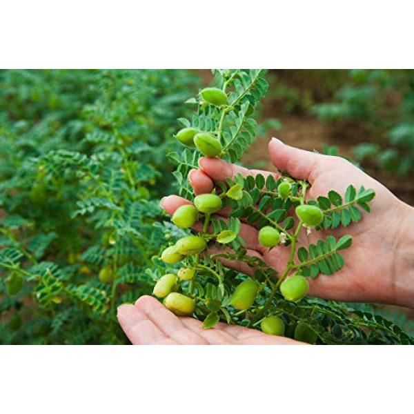 Isla's Garden Seeds Heirloom Seed 3 Rainbow Bean Mix Sprouting Seeds (Contains: Adzuki, Garbanzo, Green Pea, Lentil) 40+ Premium Heirloom Seeds (Isla's Garden Seeds),Non GMO, 85-90% Germination Rates