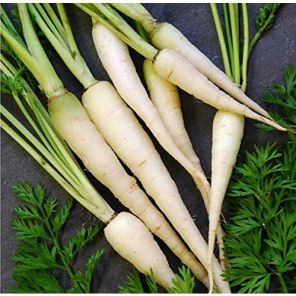 Isla's Garden Seeds Organic Seed 2 Snow White Carrot Seeds, 350+ Premium Heirloom Seeds, Gardeners Choice!, (Isla's Garden Seeds), Non GMO Organic, 85% Germination Rates Under Correct Conditions, Highest Quality Seeds, 100% Pure