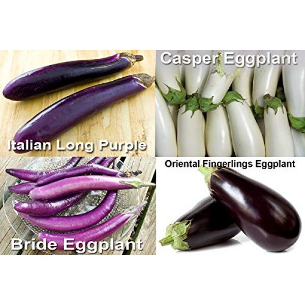 Harley Seeds Heirloom Seed 3 Please Read! This is A Mix!!! 30+ Eggplant Mix Seeds 11 Varieties Heirloom Non-GMO Aubergine, Asian, European, Italian, Profilic, Super Delicious, from USA