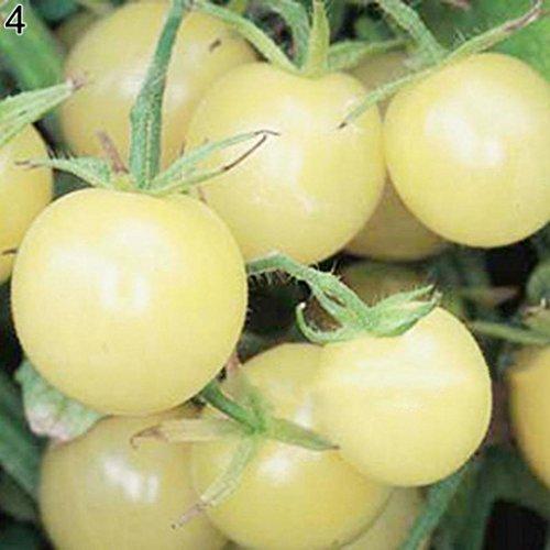SeedsUA  3 Seeds Cherry Tomato Snow White Vegetable Heirloom Ukraine