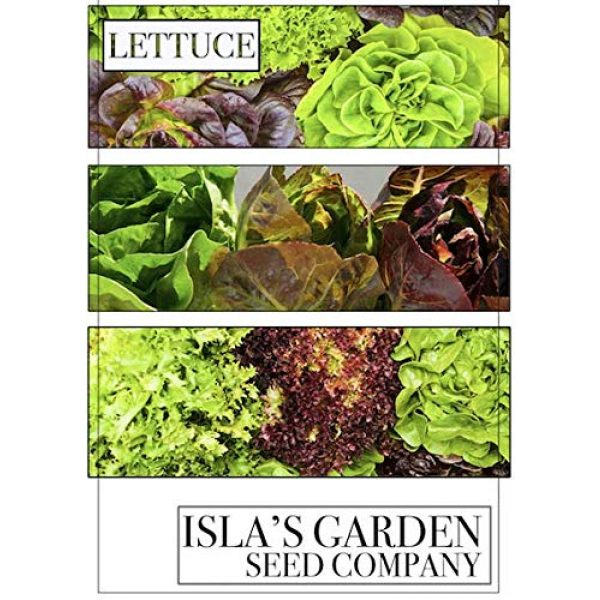 Isla's Garden Seeds Heirloom Seed 6 Lacinato Kale Seeds, 500+ Premium Heirloom Seeds, Popular Choice Kale! AKA: Dinosaur, Italiano, Toscano, Tuscan Kale, (Isla's Garden Seeds), Non GMO, 90% Germination Rates, Highest Quality Seeds