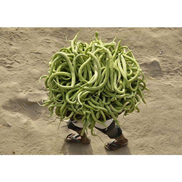 SeedsUA Heirloom Seed 3 Seeds Rare Cucumber Armenian Pickling Vegetable Heirloom Ukraine