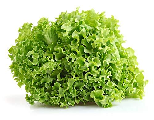 Isla's Garden Seeds  1 Salad Bowl Lettuce Seeds