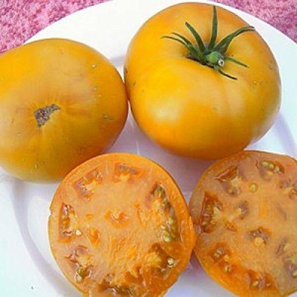 Isla's Garden Seeds Organic Seed 4 Golden Jubilee Tomato Seeds, 100+ Premium Heirloom Seeds, Popular Hot Seller and On Sale, (Isla's Garden Seeds), Non GMO Organic, 85% Germination Rate, Highest Quality Seeds