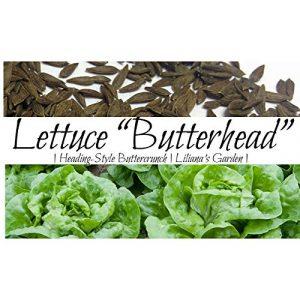 Liliana's Garden Heirloom Seed 1 Lettuce Seeds - Butterhead, Buttercrunch - Heirloom - Includes Growing Booklet - Liliana's Garden