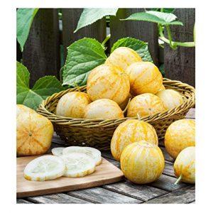 David's Garden Seeds Heirloom Seed 1 David's Garden Seeds Cucumber Pickling Lemon SL3329 (Yellow) 50 Non-GMO, Heirloom Seeds