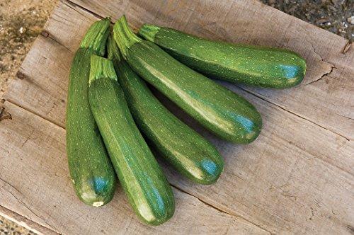 Burpee  3 Burpee Fordhook Zucchini Summer Squash Seeds 50 seeds