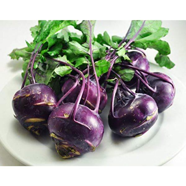 Isla's Garden Seeds Organic Seed 4 Purple Vienna Kohlrabi Seeds, 300+ Premium Heirloom Seeds, ON SALE!, (Isla's Garden Seeds), Non Gmo Organic, Survival Seeds, 90% Germination, Highest Quality